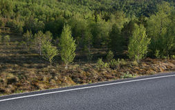 Αφηρημένοι δρόμος και δέντρα Στοκ Εικόνα