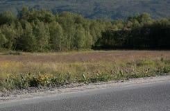 Αφηρημένοι δρόμος και δέντρα Στοκ φωτογραφίες με δικαίωμα ελεύθερης χρήσης