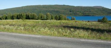 Αφηρημένοι δρόμος και δέντρα Στοκ Εικόνες