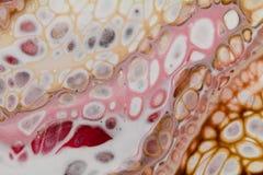 Αφηρημένος ακρυλικός χύνει τη ζωγραφική με τα κύτταρα, άσπρο ρόδινο κόκκινο καφετί πορτοκάλι στοκ φωτογραφία με δικαίωμα ελεύθερης χρήσης