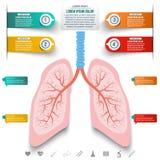 Αφηρημένος ανθρώπινος πνεύμονας από τα σημεία και τις γραμμές Σύνολο ζωηρόχρωμου infogra ελεύθερη απεικόνιση δικαιώματος