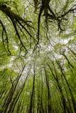 Αφηρημένος απόκοσμος δασόβιος θόλος δέντρων στοκ φωτογραφία