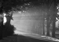 αφηρημένος θερινός ήλιος άνοιξης ακτίνων ανασκοπήσεων στοκ εικόνα