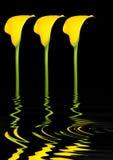 αφηρημένος κρίνος λουλ&omicro Στοκ εικόνα με δικαίωμα ελεύθερης χρήσης