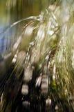 Αφηρημένος κλάδος κωνοφόρων Στοκ φωτογραφίες με δικαίωμα ελεύθερης χρήσης