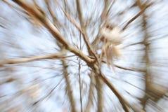 αφηρημένος κλάδος Στοκ φωτογραφία με δικαίωμα ελεύθερης χρήσης