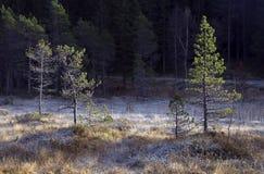 Αφηρημένος παγετός και σκιά Στοκ Εικόνα