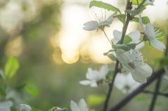 Αφηρημένος πράσινος βγάζει φύλλα Στοκ εικόνα με δικαίωμα ελεύθερης χρήσης