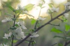 Αφηρημένος πράσινος βγάζει φύλλα Στοκ φωτογραφίες με δικαίωμα ελεύθερης χρήσης