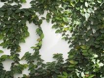 Αφηρημένος πράσινος τοίχος στο άσπρο υπόβαθρο Στοκ φωτογραφίες με δικαίωμα ελεύθερης χρήσης