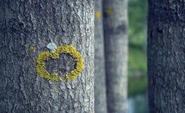 Αφηρημένος σχηματισμός βρύου στο δέντρο Στοκ φωτογραφία με δικαίωμα ελεύθερης χρήσης