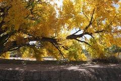 αφηρημένος φθινοπώρου φωτεινός χρωμάτων πτώσης κόκκινος ημι προτύπων φύλλων συμπαθητικός στοκ φωτογραφία