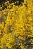 αφηρημένος φθινοπώρου φωτεινός χρωμάτων πτώσης κόκκινος ημι προτύπων φύλλων συμπαθητικός Στοκ εικόνα με δικαίωμα ελεύθερης χρήσης