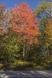 αφηρημένος φθινοπώρου φωτεινός χρωμάτων πτώσης κόκκινος ημι προτύπων φύλλων συμπαθητικός Στοκ φωτογραφίες με δικαίωμα ελεύθερης χρήσης