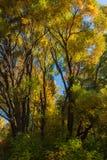 αφηρημένος φθινοπώρου φωτεινός χρωμάτων πτώσης κόκκινος ημι προτύπων φύλλων συμπαθητικός Στοκ Φωτογραφίες