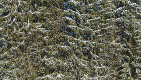 αφηρημένος χειμώνας Στοκ εικόνες με δικαίωμα ελεύθερης χρήσης