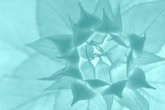 αφηρημένος floral Στοκ Φωτογραφίες