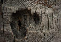 αφηρημένο δάσος σύστασης Στοκ εικόνες με δικαίωμα ελεύθερης χρήσης