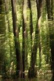 αφηρημένο δάσος Στοκ φωτογραφίες με δικαίωμα ελεύθερης χρήσης