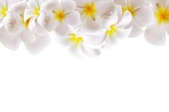 Αφηρημένο άσπρο υπόβαθρο λουλουδιών με το διάστημα Στοκ Εικόνες