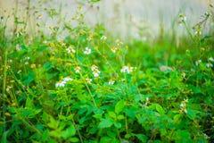 Αφηρημένο δέντρο λουλουδιών bokeh για το υπόβαθρο που θολώνεται Στοκ Εικόνα