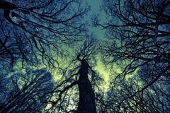 αφηρημένο δέντρο Στοκ Φωτογραφίες