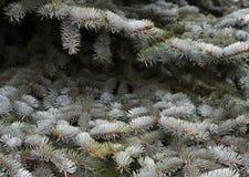 αφηρημένο ανασκόπησης Χριστουγέννων σκοτεινό διακοσμήσεων σχεδίου λευκό αστεριών προτύπων κόκκινο απομονωμένο έλατο λευκό δέντρων στοκ φωτογραφίες