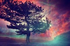 Αφηρημένο αλλοδαπό δέντρο seriaes Στοκ Εικόνες