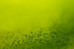 Αφηρημένο βεραμάν υπόβαθρο άνοιξη με τη θαμπάδα και τα σπινθηρίσματα πλήρης άνοιξη λιβαδιών πικραλίδων ανασκόπησης κίτρινη Θερινή Στοκ εικόνα με δικαίωμα ελεύθερης χρήσης
