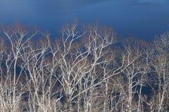 αφηρημένο δέντρο προτύπων κλάδων Στοκ εικόνα με δικαίωμα ελεύθερης χρήσης