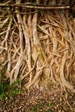 αφηρημένο δέντρο ρίζας Στοκ Φωτογραφία