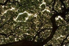 αφηρημένο δέντρο Στοκ φωτογραφία με δικαίωμα ελεύθερης χρήσης
