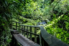 Αφηρημένο δασικό τοπίο με την ξύλινη πορεία smll σε μια διαδρομή περπατήματος Στοκ Εικόνες