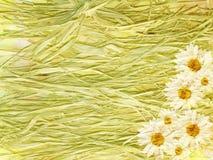 Αφηρημένο εκλεκτής ποιότητας floral υπόβαθρο με τις μαργαρίτες και το άχυρο Στοκ Εικόνες