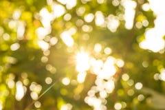 Αφηρημένο ελαφρύ πέρασμα από το φύλλο του δέντρου Στοκ φωτογραφία με δικαίωμα ελεύθερης χρήσης