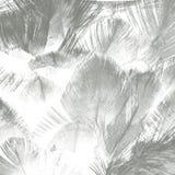 Αφηρημένο δημιουργικό υπόβαθρο από το φτερό Στοκ Εικόνες