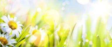 Αφηρημένο ηλιόλουστο υπόβαθρο λουλουδιών springr τέχνης Στοκ εικόνες με δικαίωμα ελεύθερης χρήσης