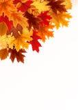 Αφηρημένο διανυσματικό υπόβαθρο απεικόνισης με το μειωμένο φθινόπωρο Leav Στοκ Φωτογραφίες