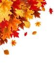 Αφηρημένο διανυσματικό υπόβαθρο απεικόνισης με το μειωμένο φθινόπωρο Leav Στοκ εικόνα με δικαίωμα ελεύθερης χρήσης