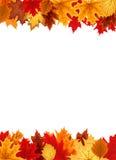 Αφηρημένο διανυσματικό υπόβαθρο απεικόνισης με το μειωμένο φθινόπωρο Leav Στοκ φωτογραφίες με δικαίωμα ελεύθερης χρήσης