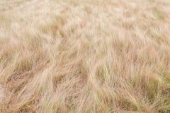 Αφηρημένο κίτρινο τομέας ή λιβάδι χλόης Στοκ Φωτογραφία