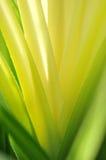 Αφηρημένο κίτρινο φύλλο κάκτων Στοκ φωτογραφίες με δικαίωμα ελεύθερης χρήσης
