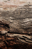 αφηρημένο καφετί δέντρο φλ&omi Στοκ εικόνες με δικαίωμα ελεύθερης χρήσης