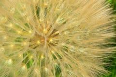 αφηρημένο λουλούδι πικρ&alp E Μαλακό φ Στοκ φωτογραφία με δικαίωμα ελεύθερης χρήσης
