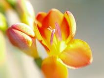 αφηρημένο λουλούδι Στοκ φωτογραφία με δικαίωμα ελεύθερης χρήσης