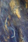 αφηρημένο μπλε αστέρι ζωγραφικής Στοκ Φωτογραφία