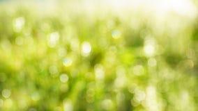 Αφηρημένο νερού κίτρινο άσπρο ελαφρύ υπόβαθρο θερινής χλόης θαμπάδων πράσινο Στοκ φωτογραφίες με δικαίωμα ελεύθερης χρήσης