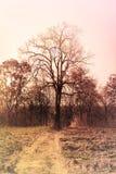 Αφηρημένο ξηρό δέντρο χρώματος φαντασίας ονειροπόλο Στοκ Φωτογραφίες