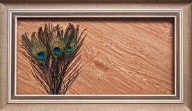 Αφηρημένο ξύλο φτερών Peacock Στοκ φωτογραφία με δικαίωμα ελεύθερης χρήσης