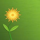 Αφηρημένο λουλούδι εγγράφου Gerbera πράσινη κοιλάδα άνοιξη κρίνων φύλλων υάκινθων καρτών ανασκόπησης Στοκ Εικόνα
